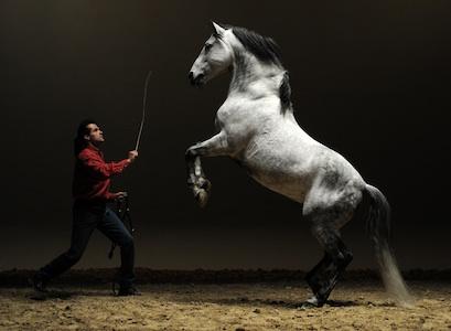Cheval Spectacle, voltige, dressage, duel, danse